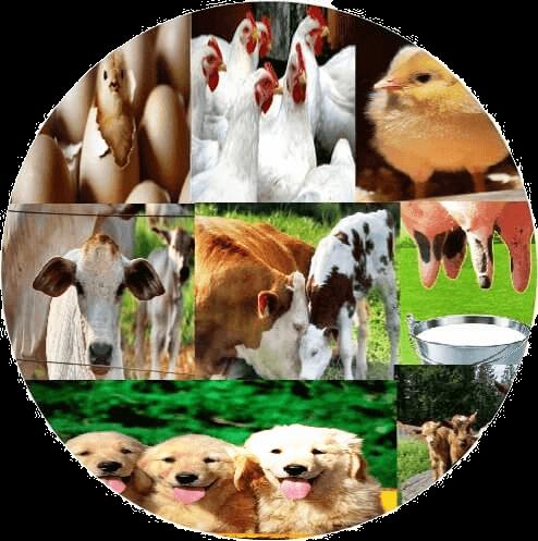 Free Veterinary Books