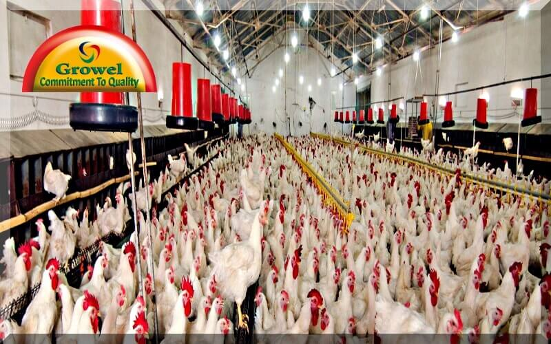 Poultry Housing Tips