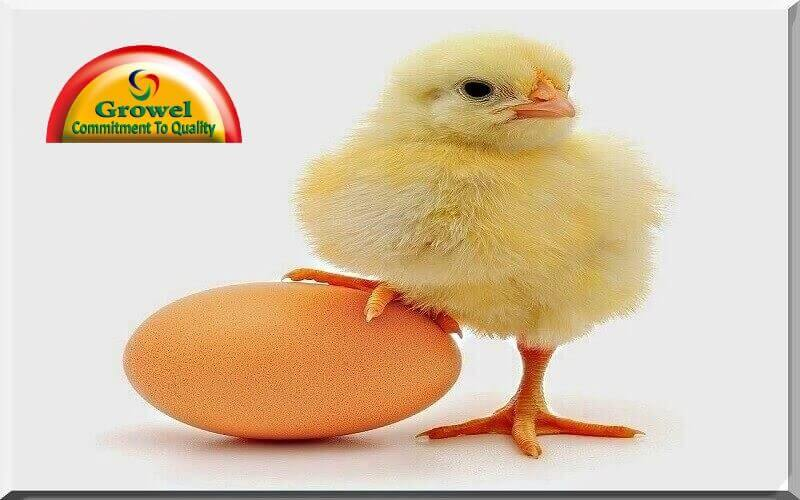 Poultry Nutrition Guide