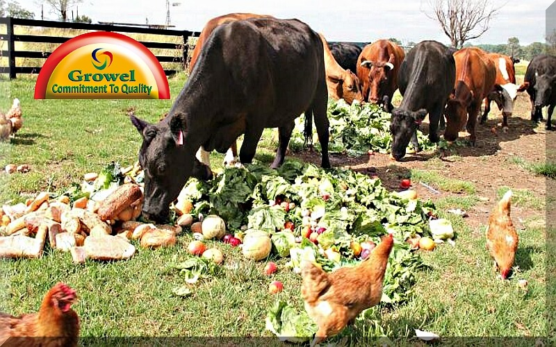 Fruit and Vegetable Wastes as Livestock Feed