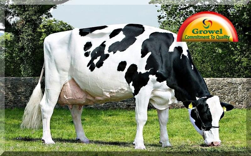 Dairy Farming In India
