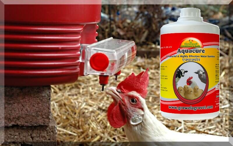 Poultry Water Treatment