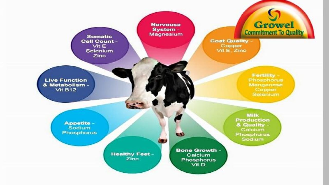 Importance of Nutrients for Cattle – Growel Agrovet