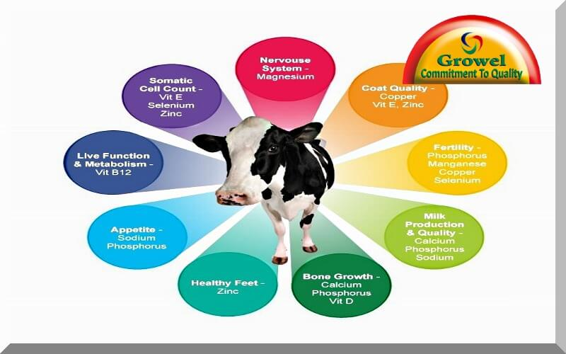 Importance of Nutrients for Cattle