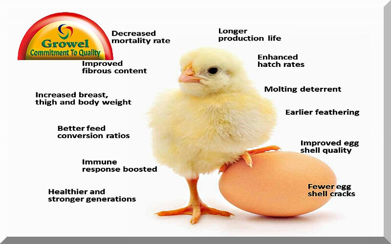 vitamins & minerals for poultry