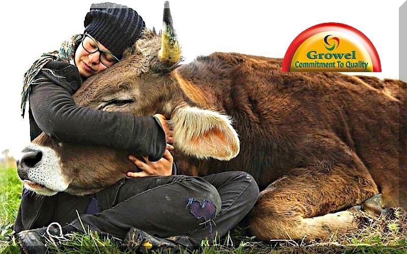 पशुओं में बांझपन