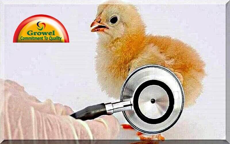 Poultry Diseases Management  – Growel Agrovet