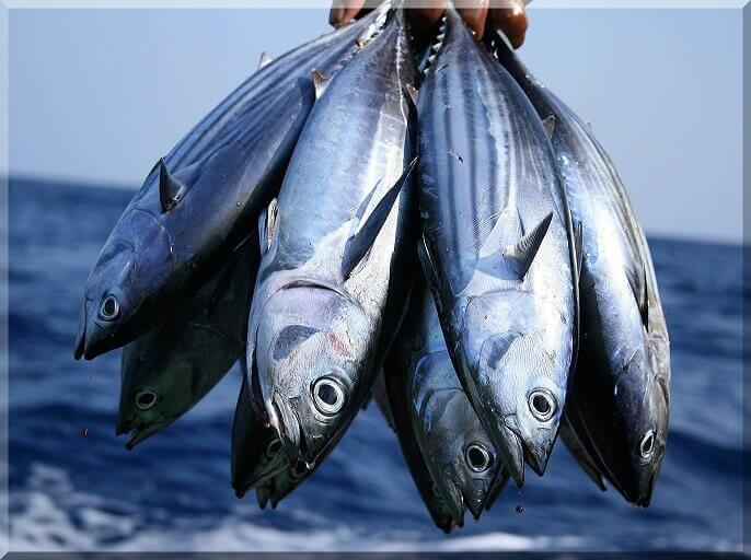 मछली पालन उद्योग