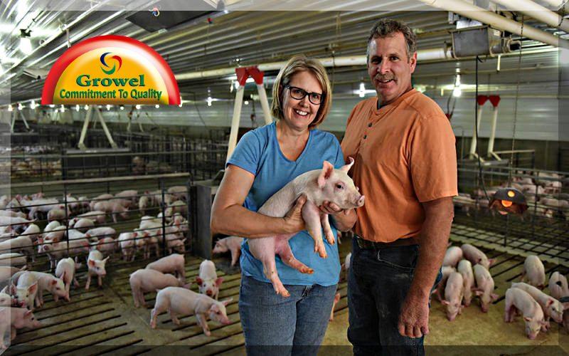 सुअर पालन व्यवसाय