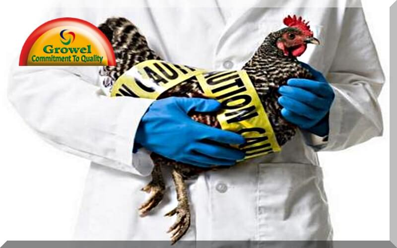 मुर्गीपालन में बायोसिक्योरिटी