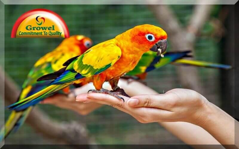 Pet Bird Nutrition