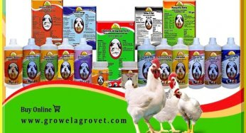 Poultry Farming Archives – Growel Agrovet