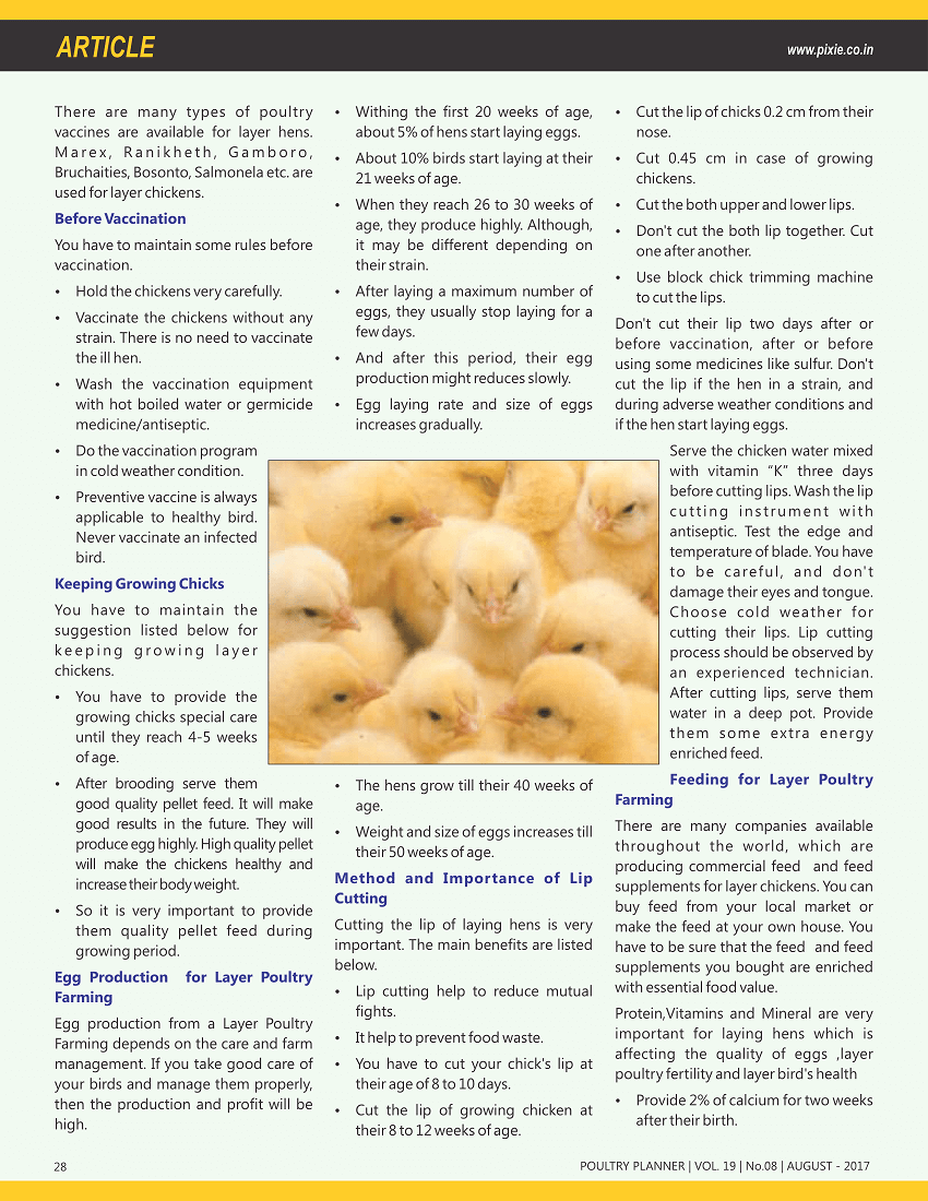 Layer Poultry Farming