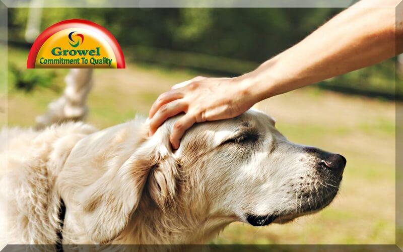 Dog Digestive Problems