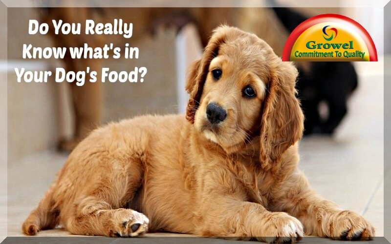 Proteins ,Vitamins & Minerals for Dog