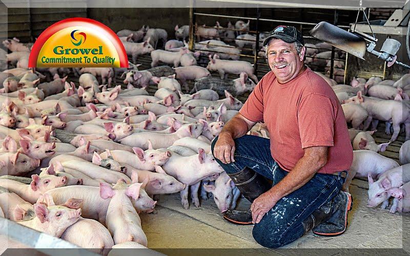 सूअर पालकों की सफलता