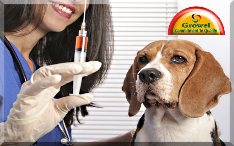 Vaccination for Dogs