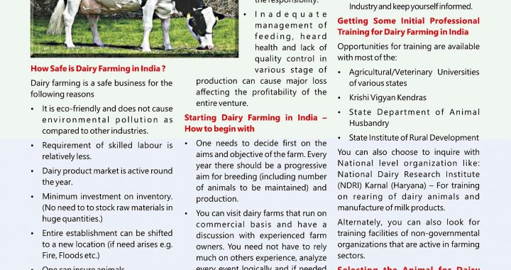Dairy Farming Article