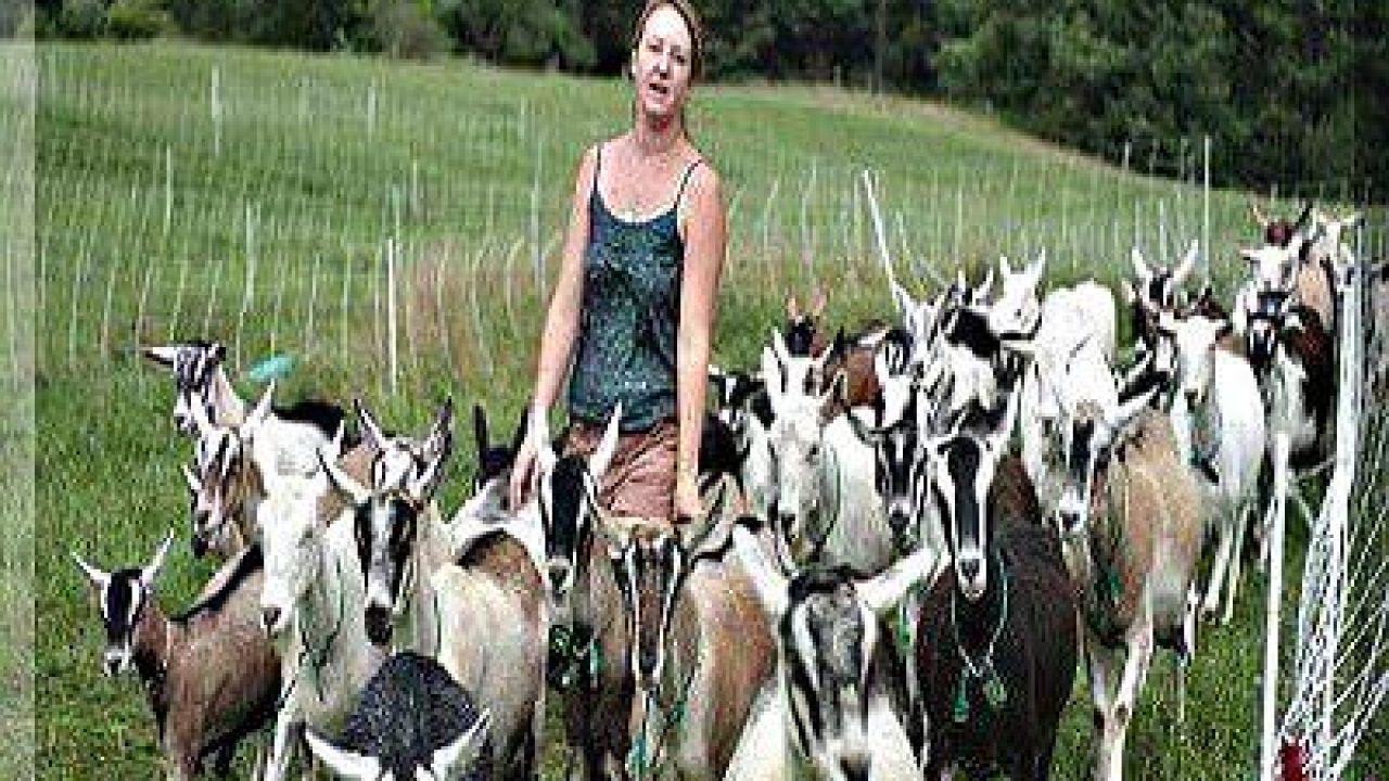 Goat & Sheep Farming Guide – Growel Agrovet