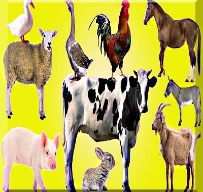 Veterinary Guide