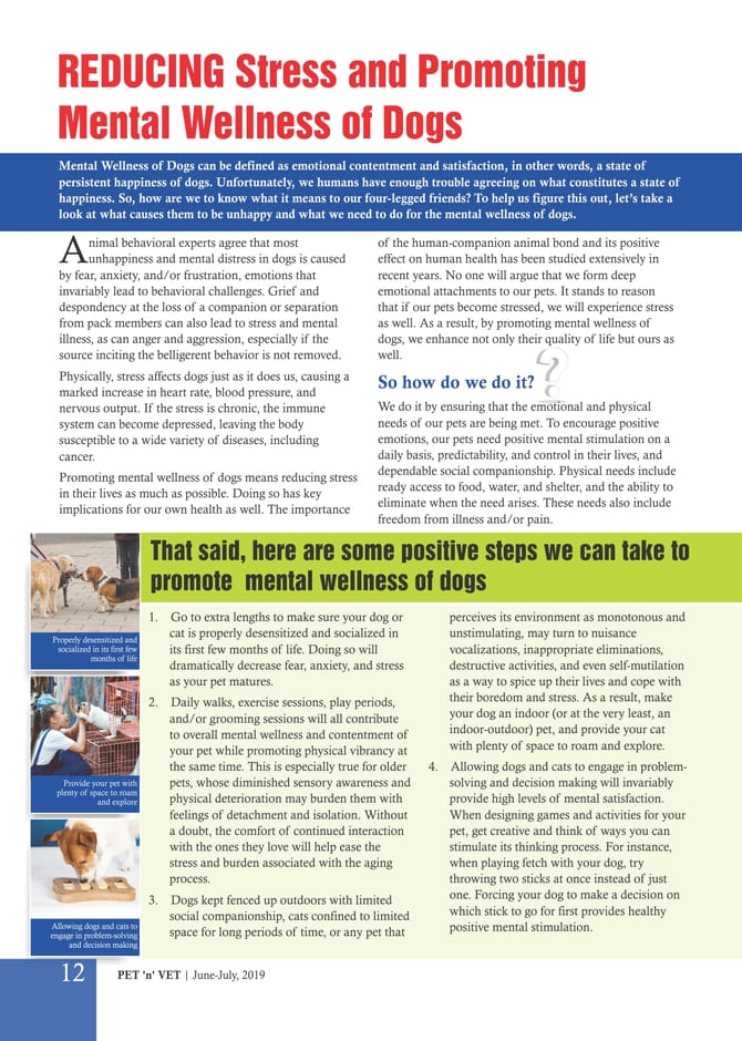 Reducing Stress & Promoting Mental Wellness of Dogs