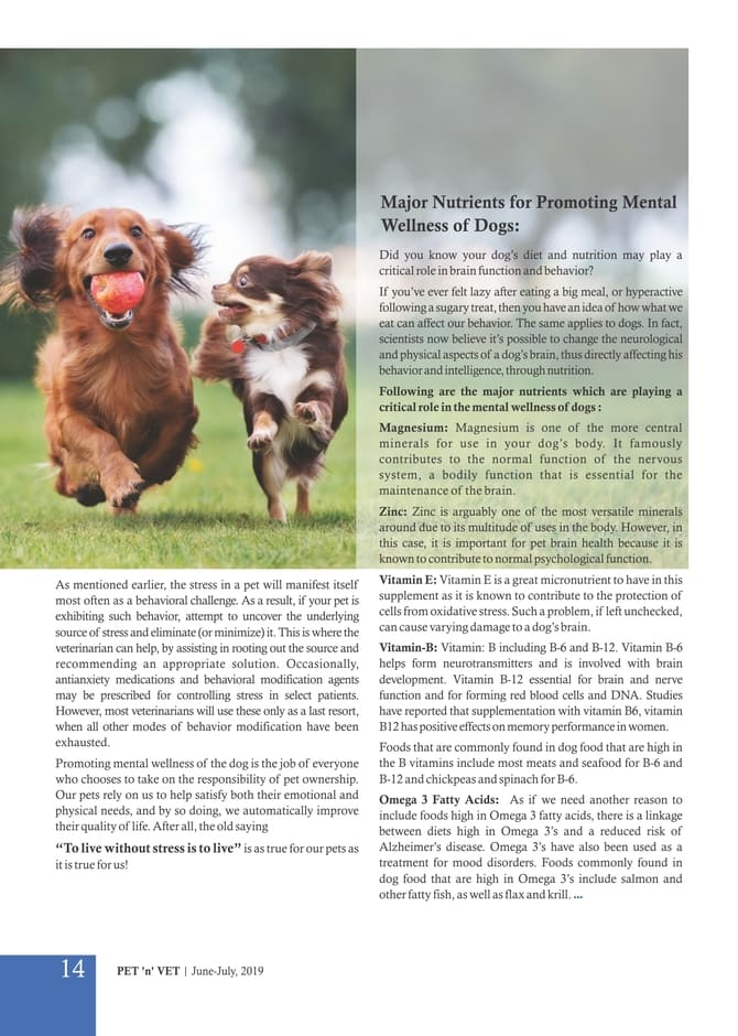 Reducing Stress & Promoting Mental Wellness of Dogs-3