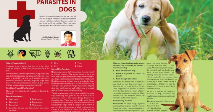 About Parasites in Dogs