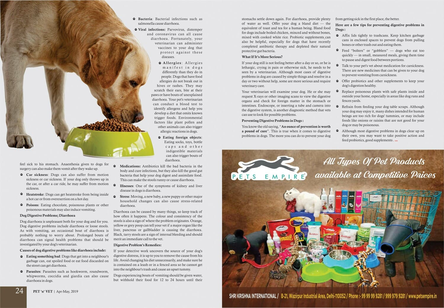 Dog's Digestive System Problems & Remedies