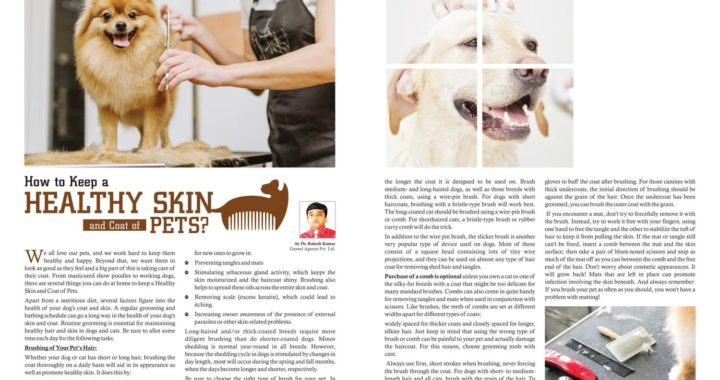 How To Keep Healthy Skin & Coat of Pets