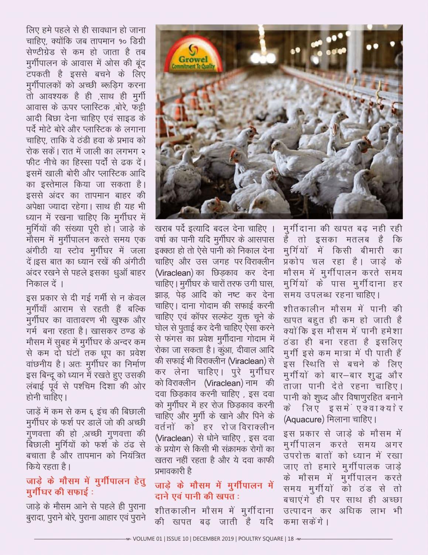 जाड़े के मौसम में मुर्गीपालन कैसे करें -2