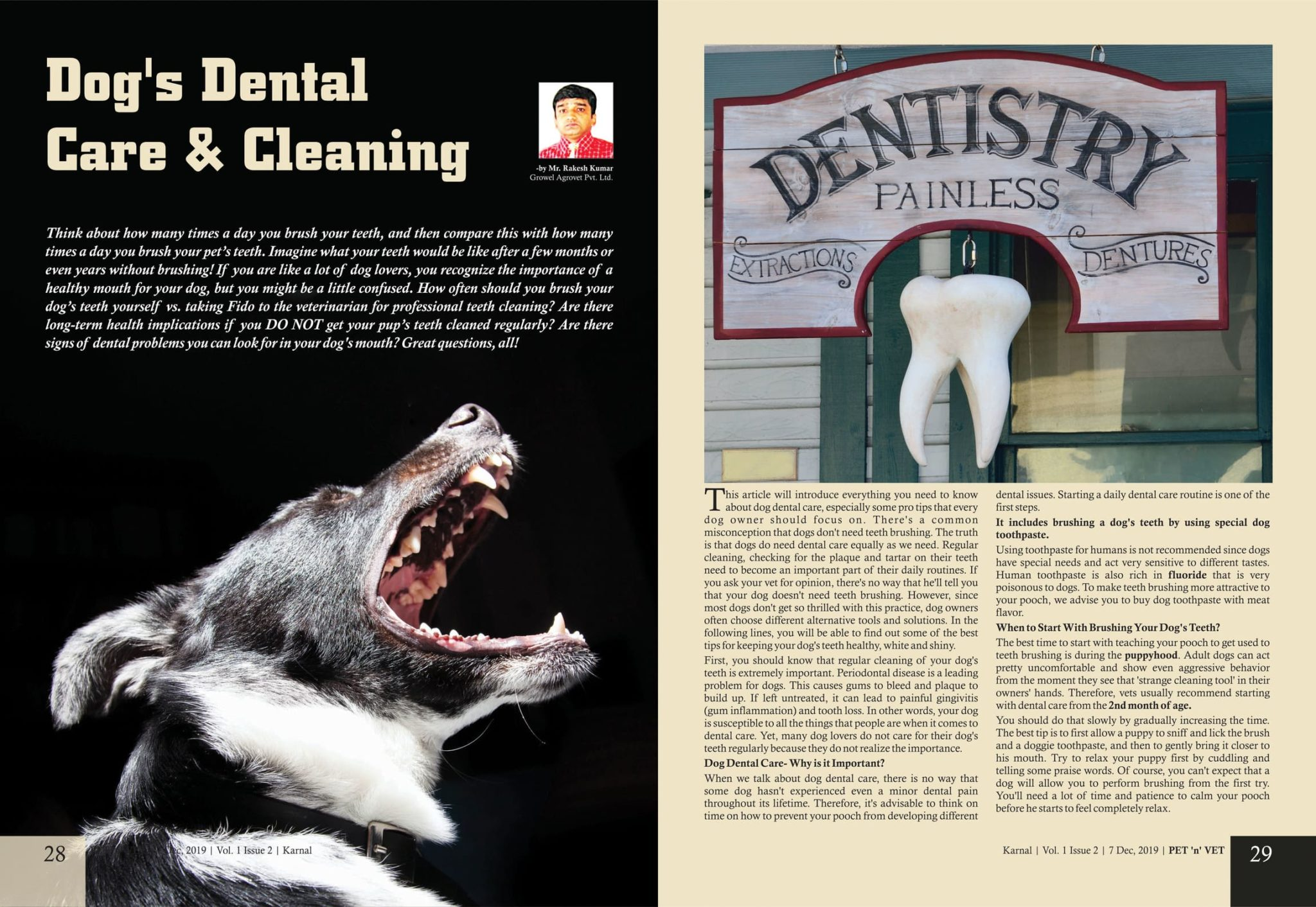 Dog's Dental Care & Cleaning