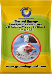 Electoral powder for poultry, Electoral for animal